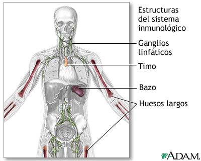 Estructuras del sistema inmunológico