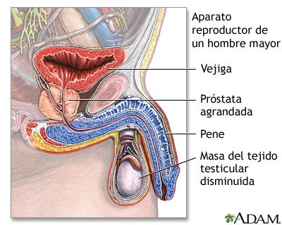 Sistema reproductivo de un hombre viejo