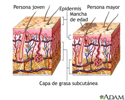 Cambios en la piel por el envejecimiento