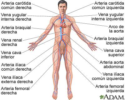 Los centros de la cirugía vascular yoshkar-ola