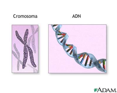 Cromosomas y ADN