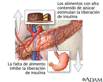 Liberación de insulina y alimentos