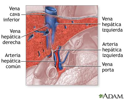 Suministro sanguíneo del hígado