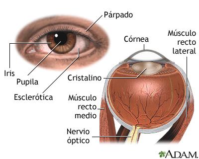 Anatomía interna y externa del ojo