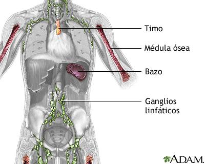 Estructuras del sistema inmune