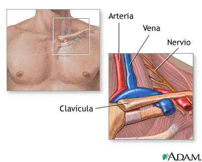 Anatomía de la salida del tórax: MedlinePlus enciclopedia médica ...