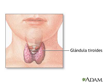Anatomía de la tiroides en el niño