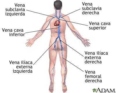 Mucho los dolores vivos en los pies a varikoze