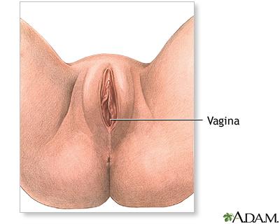 Anatomía perineal femenina