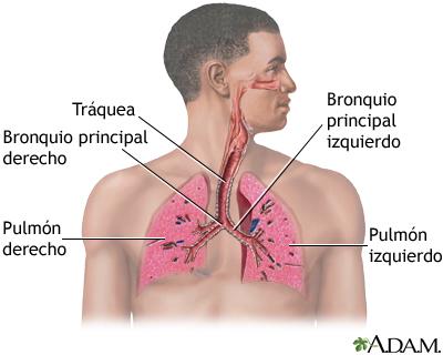 Sistema respiratorio: MedlinePlus enciclopedia médica illustración