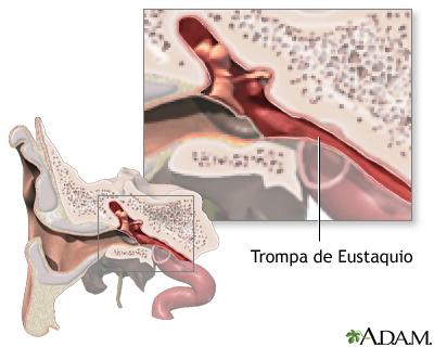 Anatomía de la trompa de Eustaquio