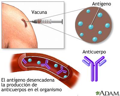 Inmunizacin o vacuna contra la Hepatitis A