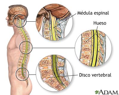 Anatomía de la columna vertebral: MedlinePlus enciclopedia médica ...