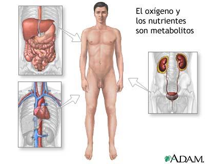 Metabolito