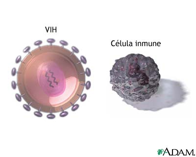 Virus VIH y células T