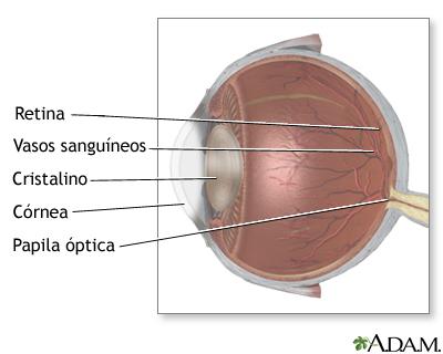 Anatomía lateral del ojo: MedlinePlus enciclopedia médica illustración