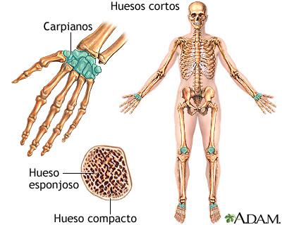 Huesos cortos: MedlinePlus enciclopedia médica illustración