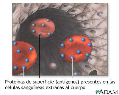 Proteínas superficiales que causan rechazo