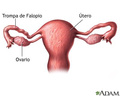 Anatomía uterina