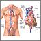 Cateterización cardíaca