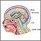 Hidrocefalia - Serie