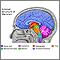 Estructuras del cerebro