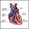 Cámaras del corazón