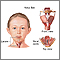 Caja laríngea