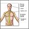 Sistema nervioso central y sistema nervioso periférico