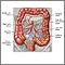 Suministro sanguíneo al intestino grueso