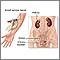 Exámenes de la función renal