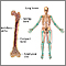 Huesos largos