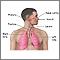 Vista del sistema respiratorio